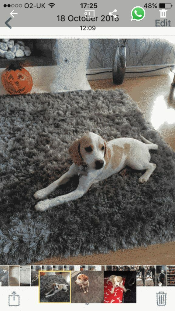 Dogs Free To Good Home Gumtree Belfast