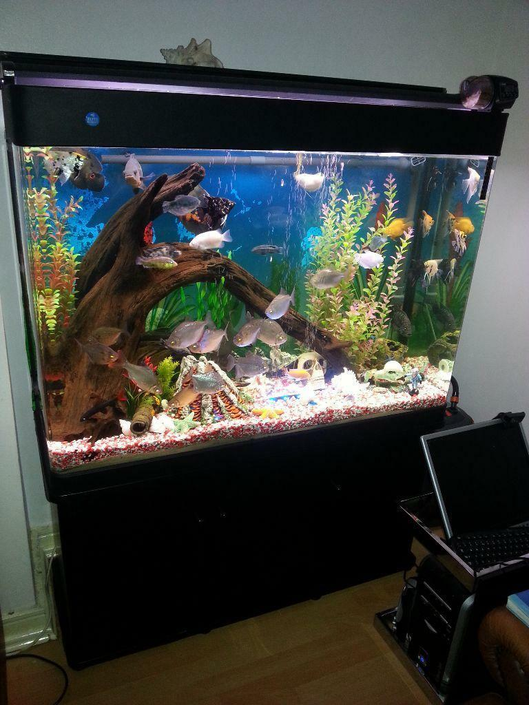 Tropical set up fish tank and stand full set up united for Setting up a fish tank
