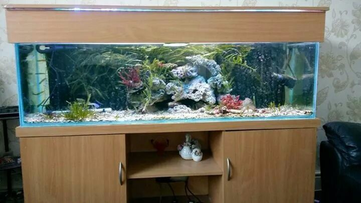 Fish Tanks For Sale Bristol Beautiful Fish Tank For Sale
