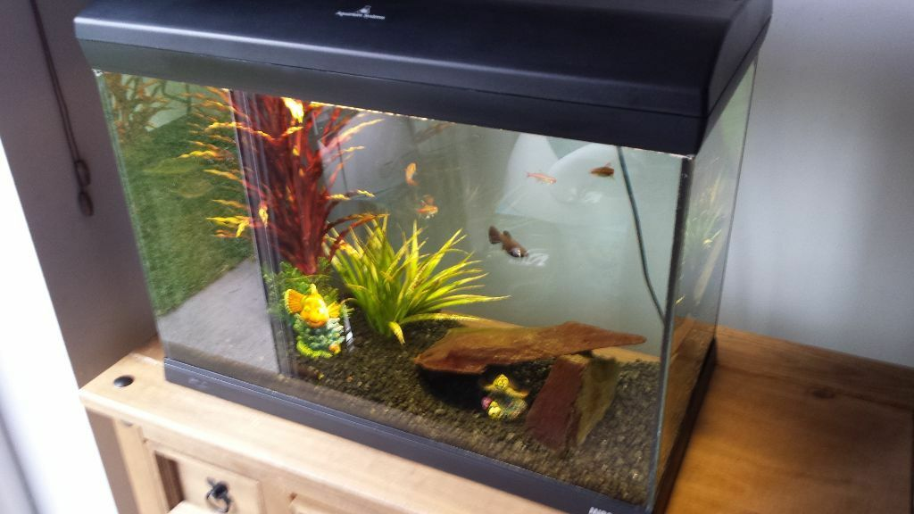 Fish tank full set up filter heater lights gravel united for Fish tank with filter and heater