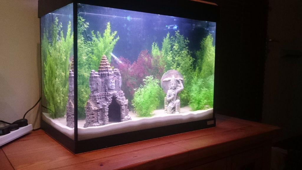 fish tank maintenance 90 litre nano 90 litre marine aquarium tank full setup with live rock. Black Bedroom Furniture Sets. Home Design Ideas