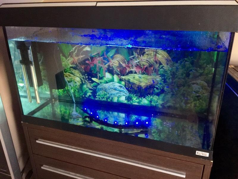3ft aquarium for sale 3ft fish tank for sale boston for Why is my fish tank so cloudy