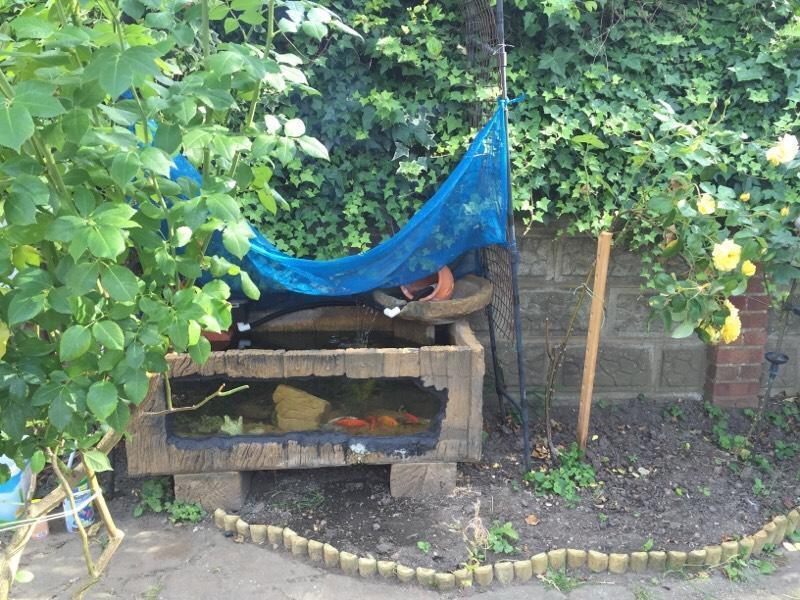 Garden Aquarium Fish Tank Pond Open To Offers United