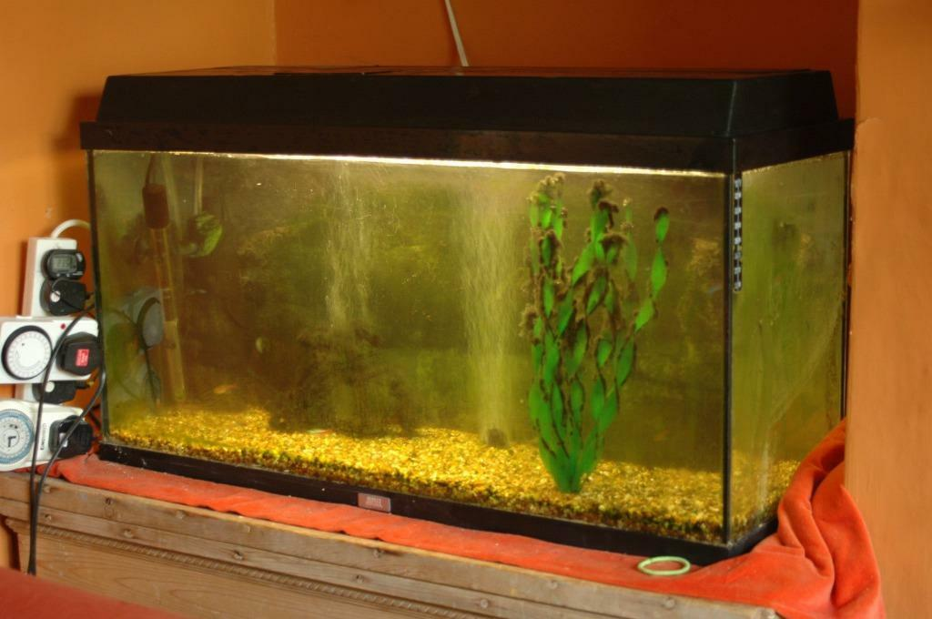 Complete fluval aquarium set up with fish pump filter for Fish tank with filter and heater