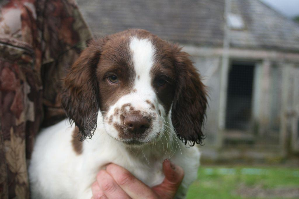 Gumtree Dogs And Puppies Scotland