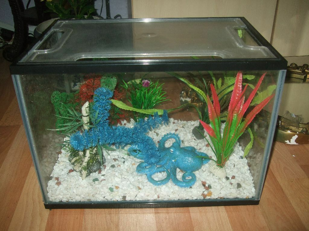 Fish tank including plastic plants stones and octopus for Octopus fish tank