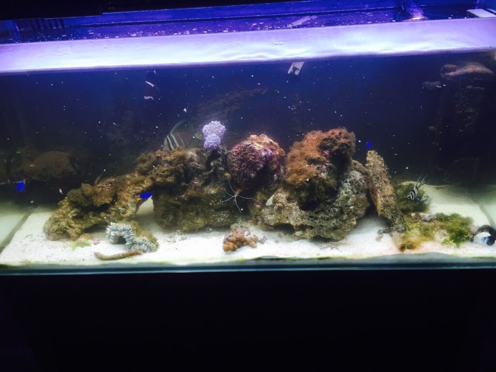 Images map for Saltwater fish tank for sale