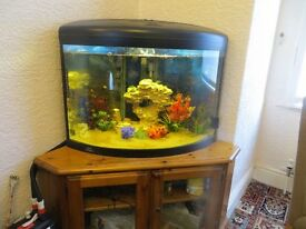 Fish tank in united kingdom other dining living room for Fish tank dining room table