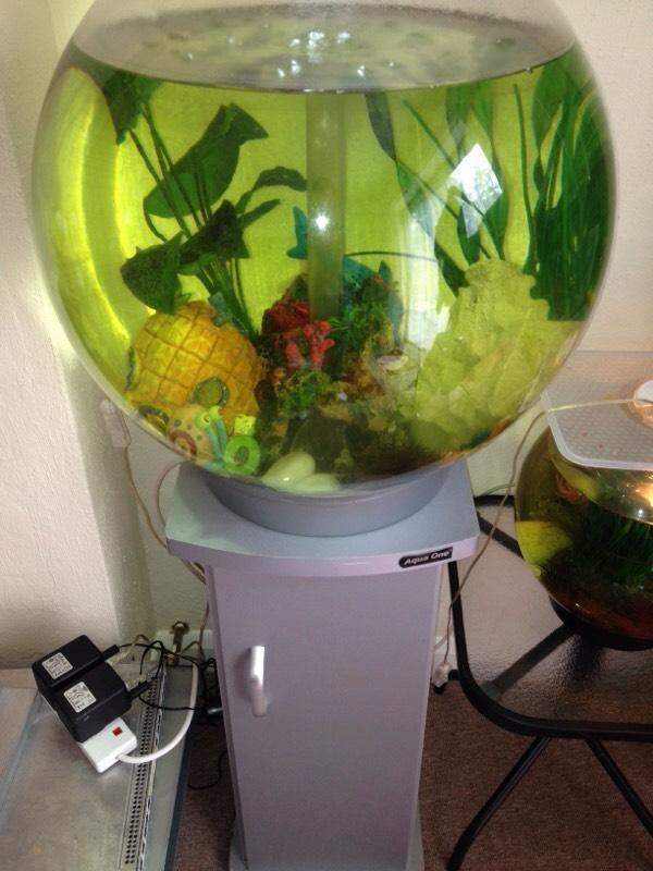 Large biorb fish tank and stand united kingdom gumtree for Used fish tanks for sale many sizes