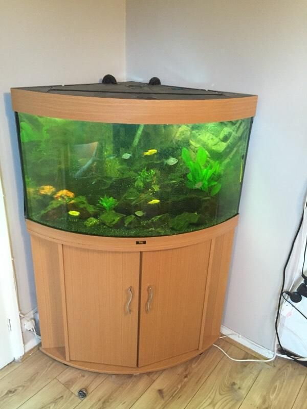 Juwel trigon 190 corner fish tank with storage underneath for Corner fish tank for sale