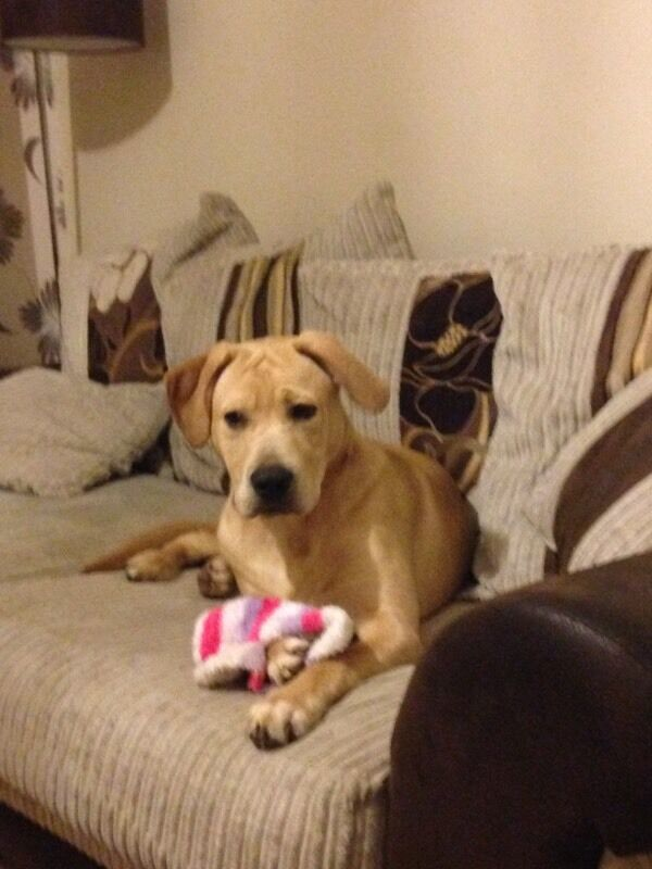 Gumtree Dogs Free To Good Home