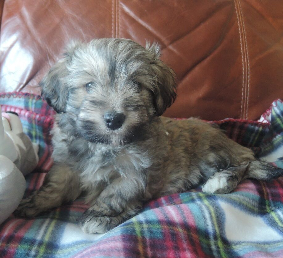 Gumtree Dogs And Puppies Free To Good Home