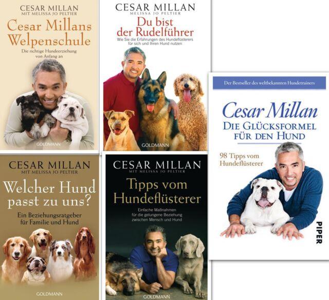 Cesar Millan Set (Hundeflüsterer, Hundeerziehung, Hundetraining, Hundepflege)
