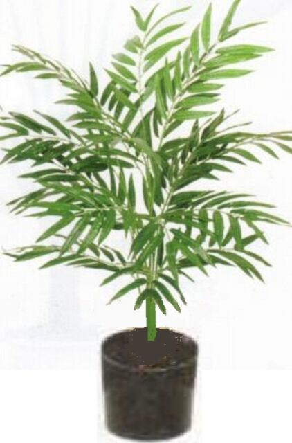 3u0027 PHOENIX PALM PLANT ARTIFICIAL ARRANGEMENT SILK TREE BUSH IN POT FLOWER  FLORAL