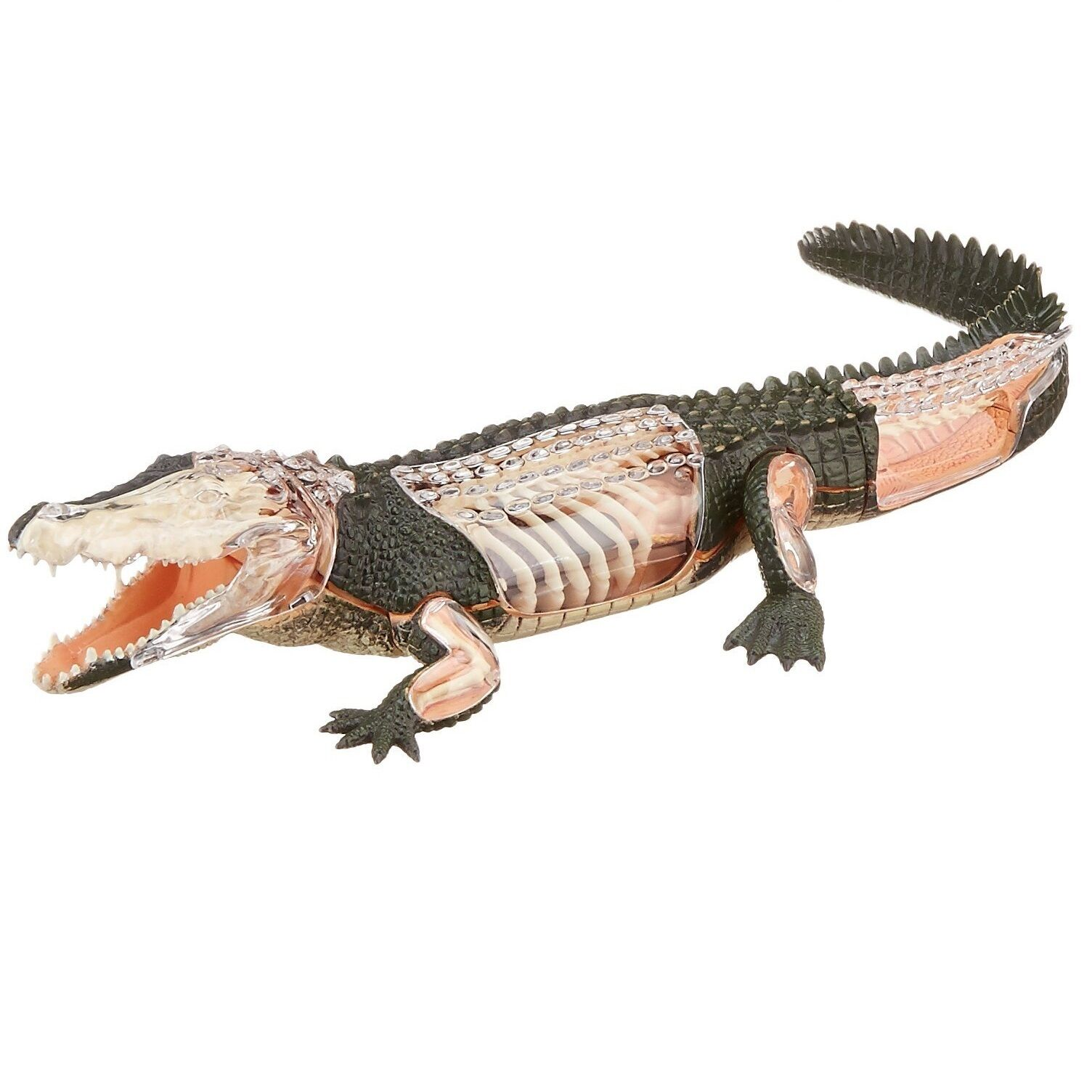 TEDCO Toys 26114 4d Vision Crocodile Anatomy Vyo1109 | eBay
