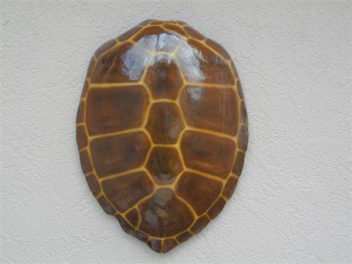 Fiberglass Fish Mount Green Sea Turtle Shell | eBay