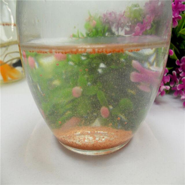 Brine Shrimp In Aquarium 1000 Aquarium Ideas