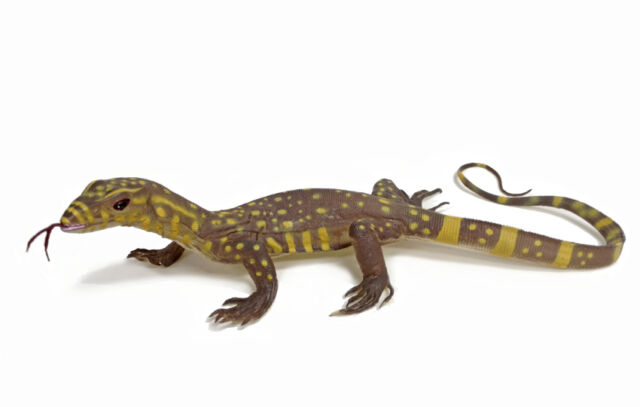 Good Lizards For Kids