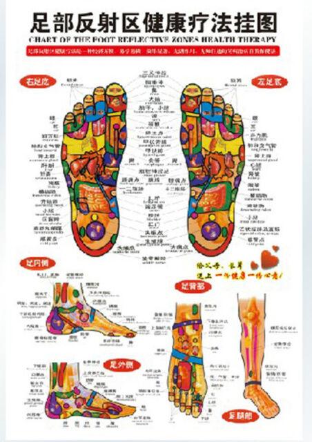 Chinese chart foot reflective zones therapy reflexology massage wall