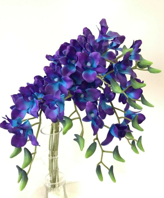 6x latex real touch singapore blue purple orchid dendrobium orchids 6x latex real touch singapore blue purple orchid dendrobium orchids silk flowers mightylinksfo Images