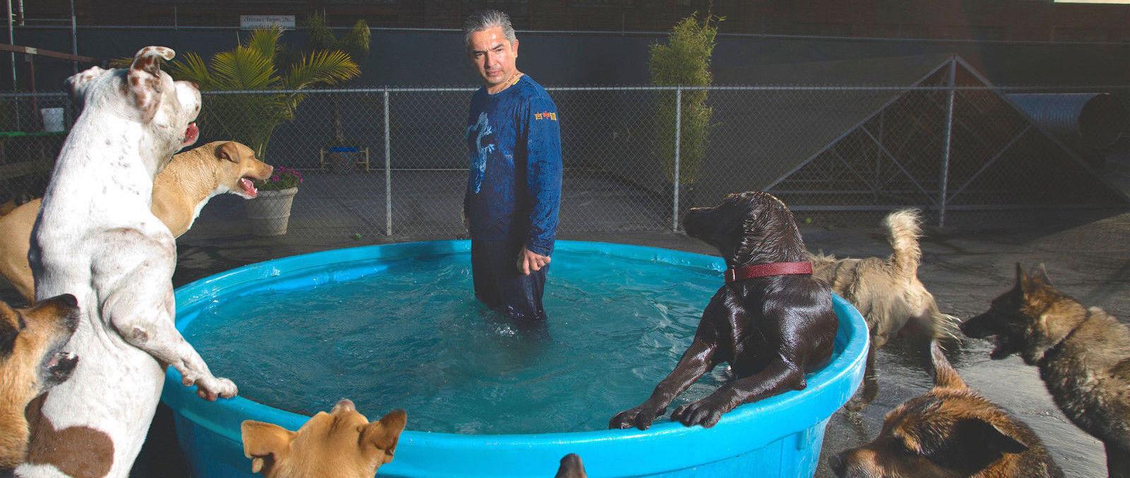 Цезарь Миллан - Переводчик с собачьего